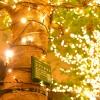 今年から名駅前のイルミネーションにシンフォニー豊田ビル前の「グリーンモール」が仲間入り!