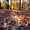 秋の終わりの名城公園はこんなにすばらしい(掲載が真冬になってしまいすみません)